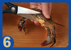 Softcrab Cleaning Step 6