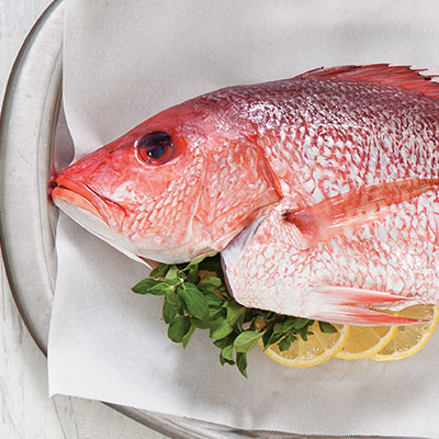 how to draw a red snapper