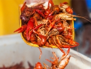 MudbugMadness_Crawfish